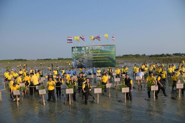 """""""Varawut"""" the Minister of MNRE presided over the activity of planting trees and forests in honor of the Majesties on national forest resource conservation day in the mangrove forest area at Petchchaburi Province."""